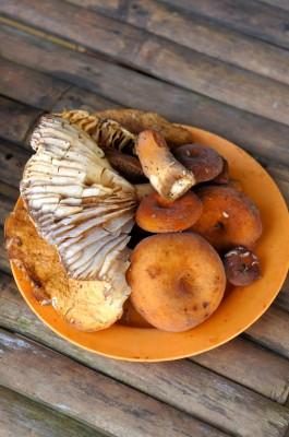 chiangmai-wild mushroom