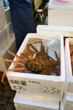 tsukiji63