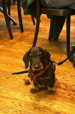 zurich - dog at federal brasserie