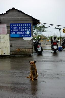dog with three legs - jiufen