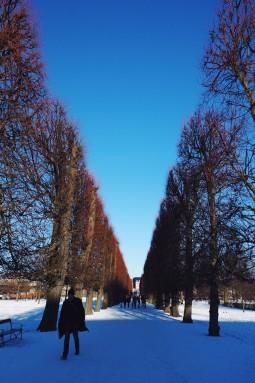 tree-lined path-Rosenborg Castle Gardens