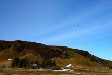 iceland flying birds2 - Kirkjugólf