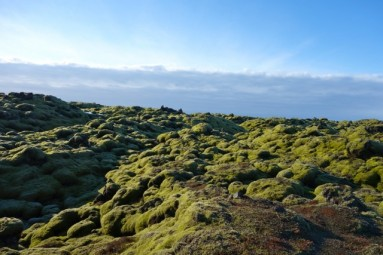 sourth iceland moss covered lava field