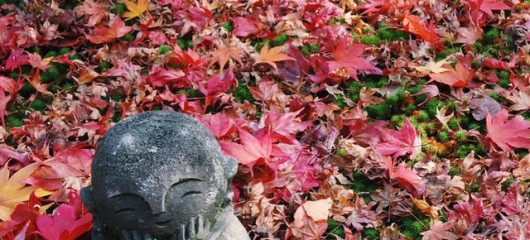 enkoji temple in autumn - fallen leaves